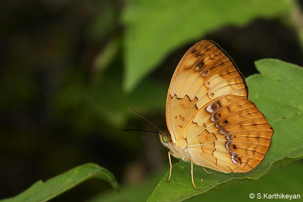 Southern Rustic