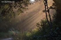 Sunrise at Corbett