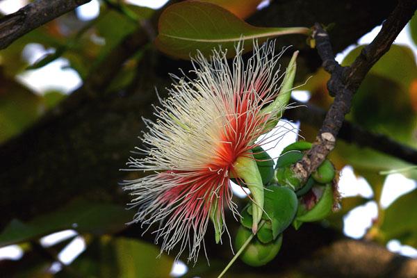Flowering Trees – II – Karthik's Journal