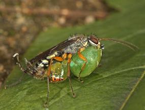 Parental care in potter wasps